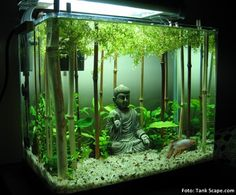 Betta Tank Ideas Betta fish are wonderful, with their brilliant colours and glorious fins. They deserve a home that allows them to thrive and live a healthy life. Actually, many … Ideas and Advice for Your Betta Tank READ Aquarium Terrarium, Planted Aquarium, Terrariums, Planted Betta Tank, Fish Tank Terrarium, Marimo Moss Ball Terrarium, Snake Terrarium, Terrarium Diy, Small Fish Tanks