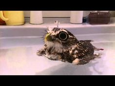 This Little Burrowing Owl Loves Baths, And He Takes Them In The Cutest Possible Way - Dose - Your Daily Dose of Amazing