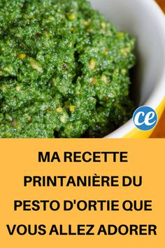 My Spring Recipe for Nettle Pesto You Will Love! Raw Food Recipes, My Recipes, Vegetarian Recipes, Healthy Recipes, Vegetable Drinks, Vegetable Salad, Vegan Appetizers, Appetizer Recipes, Healthy Eating Tips