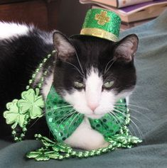 I Am Ready For The St. Patty's Day Parade Along With My Huge Bag Of Catnip #catnip #green
