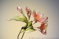 2015 桜 簪 【 紅山桜 】Cherry Blossom 02 | by 榮 ‐sakae‐
