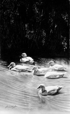 pleasant waters 600 x 320 graphite on paper Pencil Art, Graphite, Wildlife, Paper, Painting, Graffiti, Painting Art, Paintings, Paint