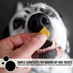 Simple Shortcuts for Making Baked Dog Treats in Any Size - Dalmatian DIY Diy Dog Treats, Homemade Dog Treats, Christmas Dog, Homemade Christmas, Dalmatian, Dog Friends, Small Dogs, Dog Food Recipes, Pets