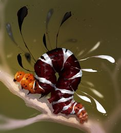 Weird Insects, Cool Insects, Bugs And Insects, Beautiful Bugs, Amazing Nature, Cool Bugs, Moth Caterpillar, Insect Art, Chenille