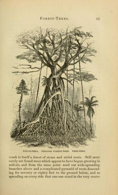 The Malay Archipelago Wallace