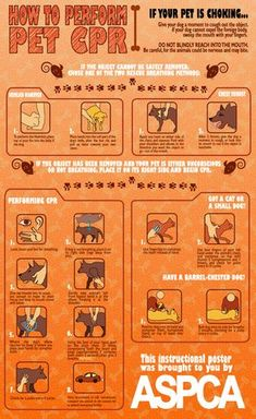 pet_cpr_instructional_poster_by_ginkotoothed-d3hw9r1.png 792×1,292 pixels