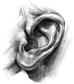 ear drawing, How to Draw Ears - Step by Step, -tutorial Step by Step with thanks to proko, How to draw Face, Resources for Art Students , CAPI ::: Create Art Portfolio Ideas at milliande.com, Art School Portfolio Work:
