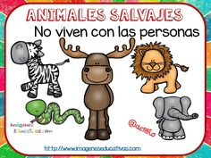 Tipos de animales claseficación (5) Zoo Animals, Cute Animals, Animal Classification, Dual Language Classroom, First Grade Science, Free Frames, Colouring Pics, Welcome To The Jungle, Teaching Activities
