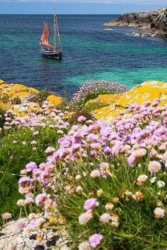 "yellow-buds-of-may: ""yellow-buds-of-may: Isle of Mull, Scotland by ankertw on FLICKR. """