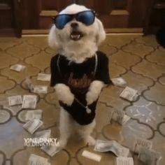Mon chien est en mode swag :o  http://www.15heures.com/gif/yxxep #WTF