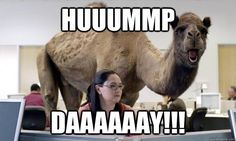 HAPPY HUMMMPPP DAYYY. Hump-day job search? Check out our latest postings.   http://www.tristaff.com