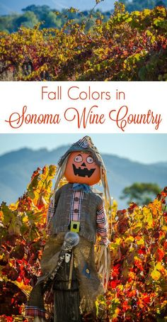 Autumn is a great time of year to visit Sonoma wine country. Fall Colors photography and a wine-tasting trip to @jordanwinery.