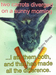 Bunny Bonez.. Funny carrot.
