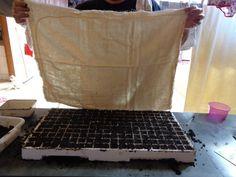 Aprenda agora como plantar alface orgânica em qualquer espaço. No artigo #01 Vamos ensinar como fazer as mudas de alface utilizando adubos orgânicos.