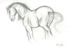 cow drawings in pencil | Pencil Drawing Of A Horse by NJSFX