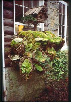 Kathryn MacDougald combined baskets of moss and a bird house for a rustic window box-type feature for her log cabin. Moss Garden, Garden Art, Garden Design, Garden Ideas, Garden Pictures, Fairy Houses, Shade Garden, Garden Inspiration, Container Gardening