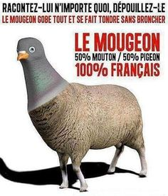 et on dit vive la France Humour Couple, Le Pigeon, Skull Anatomy, Image Fun, Funny Art, Weird Facts, Satire, Dog Care, Haha