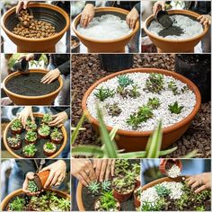 DIY Terracotta Basin Succulent Planter with Gravel