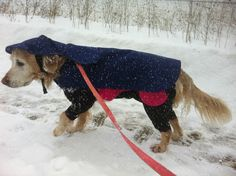 "There is no ""bad weather"" as long as you dress appropriately! www.practicaldog.ca"