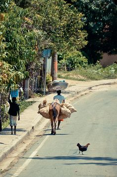 Dominican Why is that chicken crossing the road?