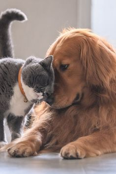 The most popular pet names - Discover the most popular names of pets. Discover the most popular names of pets. Discover the most - Cute Funny Animals, Cute Baby Animals, Cute Cats, Beautiful Dogs, Animals Beautiful, Unusual Animal Friendships, Tier Fotos, Pet Names, Dog Pictures