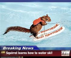 Breaking News - Squirrel learns how to water ski!