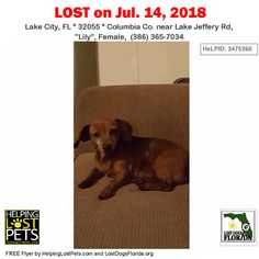 Have You Seen This Lost Dog Lostdog Bruno Kissimmee Seven