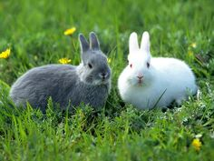 Amazing Facts about Rabbits For Kids