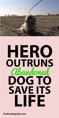 Hero Outruns Abandoned Dog To Save Its Life!