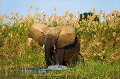 Simbabwe Gruppenreisen - Reisen nach Simbabwe und Zimbabwe Safaris günstig buchen direkt beim Veranstalter.