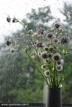 Yağmurlu bir pazartesi sabahından herkese günaydın :)