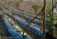 Entutorado con Malla Pepinera HOTOMALLAS ofrece beneficios contra el tutoreo con hilos  rafia/pita. Pita, Trellis, Vegetable Garden, Leotards