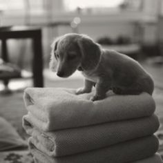 Usually not a dauschund fan but this is Presh