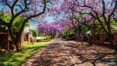 Drive-lapse/timelaspe while driving through suburban streets in Pretoria, South Africa with blooming Jacaranda trees on a summer/sunny day, 4k 25p. #TLSA #wedoallthingstimelapse #stock #stockfootage #timelapse #southafrica Jacaranda Trees, City Scene, Pretoria, Stock Video, High Quality Images, Sunny Days, Stock Footage, South Africa, Sunnies