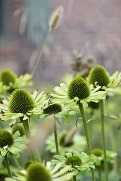 Bee Friendly Plants, Border Plants, Flower Quilts, Green Life, Summer Garden, Flower Beds, Nature Photos, Trees To Plant, Garden Inspiration