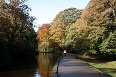 The upper pond in Endcliffe Park