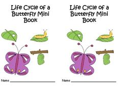 Life Cycle of Butterfly!!! Students will read about each stage of the life cycle, color pictures for each stage, and then view a graphic representation of the entire life cycle of a butterfly.