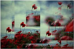 """""""However, his nose throbbed painfully, which he thought odd in the circumstances. While he placed considerable trust in the understanding and mercy of his Creator, he harbored that residue of elemental guilt that made all men fear the chance of hell."""" - Quote from """"Voyager"""" by Diana Gabaldon (In Flanders fields the poppies blow..)"""