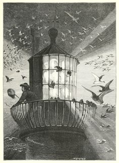 coldisthesea:    themagiclantern:  turnofthecentury:  oldbookillustrations: Mobbing the great sea lanternIllustration by Charles Whymper, from Birds of the wave and woodland, by Phil Robinson, London, 1894.Via archive.org.