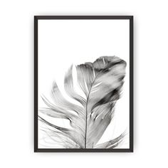 Feather via Polyvore featuring home and home decor