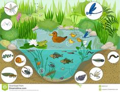 Illustration about Ecosystem of pond with inhabitants. Illustration of duck, bodies, cartoon - 60021241 Pond Crafts, Ecosystems Projects, Lake Animals, Summer Preschool Activities, Animal Art Projects, Pond Life, Black Wallpaper Iphone, Monthly Themes, Science Projects For Kids