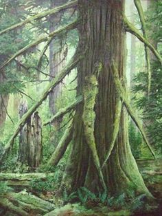 Studio KD - Artwork of Karel Doruyter, West Coast Rainforest Series