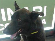 Mies Rebull #veterinario www.veterinario.es