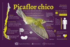 Flora, Pet Birds, Animals And Pets, Parrot, Fish, Medical Mnemonics, Patagonia, Behance, Nursery