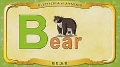 Multipedia of Animals. Letter B - Bear