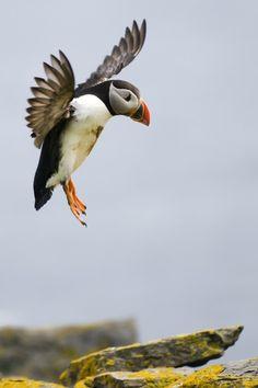 Geweldige foto gemaakt op de Shetland eilanden door reisreporter Reiswandaris