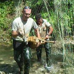 Animali, L'Aquila: salvato capriolo che rischiava di annegare