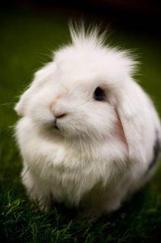 cute little bunny - fluffly whirte