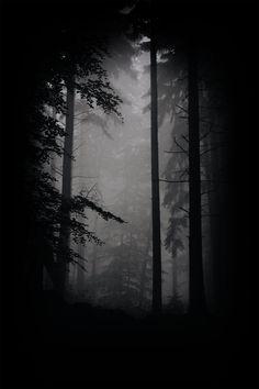 Der Wald by feigenfrucht on DeviantArt Dark Wallpaper Iphone, Black Wallpaper, Wallpaper Backgrounds, Dark Photography, Black And White Photography, Nocturne, Mystical Forest, Dark Forest, Monochrom