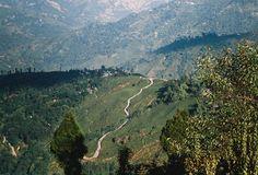 Long and winding road leading to a Darjeeling Tea garden